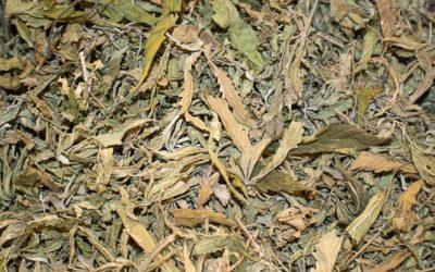 Cómo dejé de fumar con hojas de cáñamo y cannabis